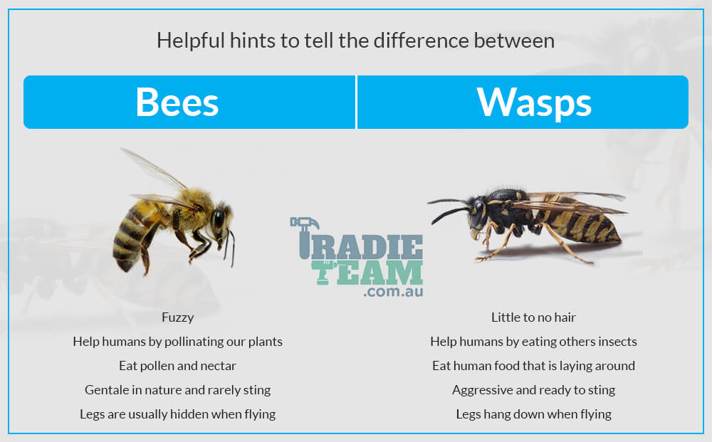 difference-between-bees-and-wasps