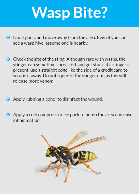 Wasp bite remedies