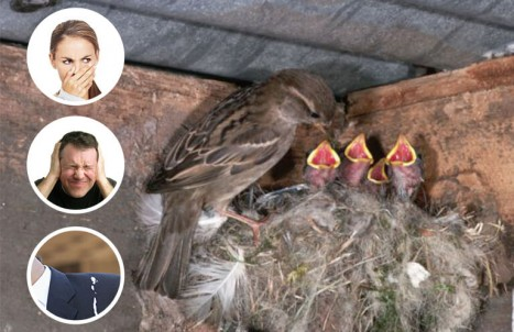 bird pest control & nest removal melbourne