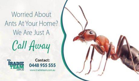 ants pest control melbourne