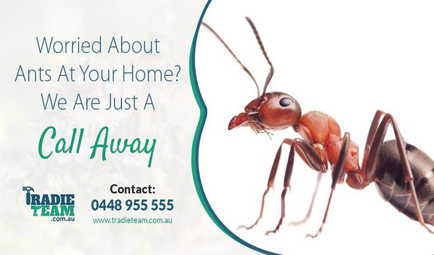 How To Fight Off Argentine Ants Infestation