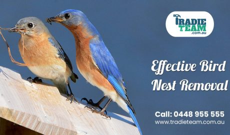Are Birds Invading Your Residential Premises?